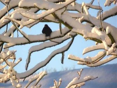 photographie Comme un oiseau sur sa branche