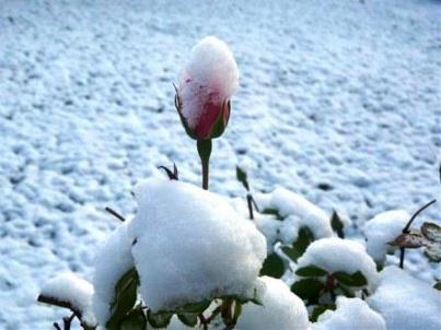 photographie rose et blanc